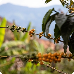 The story of our coffee